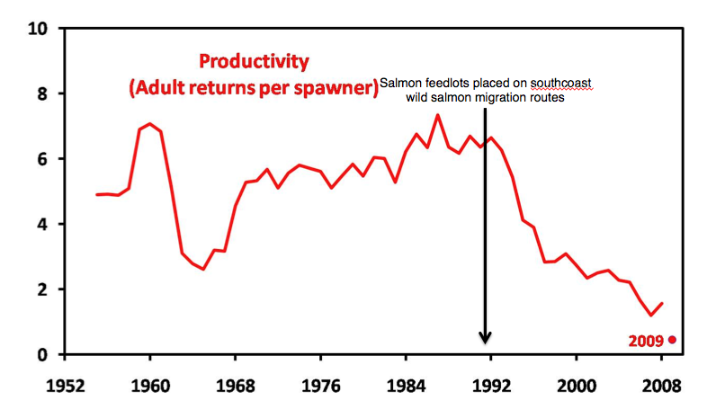 A graph created by Alexandra Morton purporting to show that the productivity of Fraser sockeye dropped right around the same time salmon farms in B.C. grew.