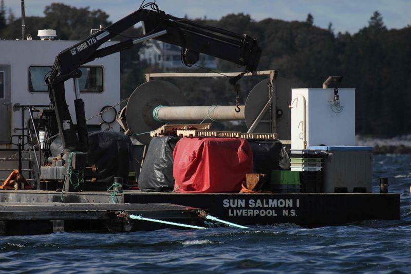 Sun salmon