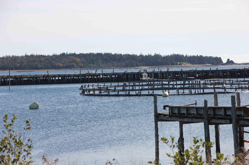 Docks and nets