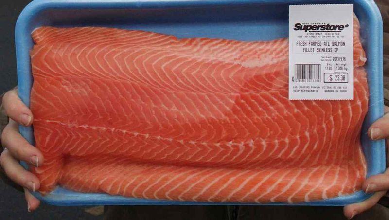 Norwegian salmon virus in bc met with regulatory silence for Piscine reovirus