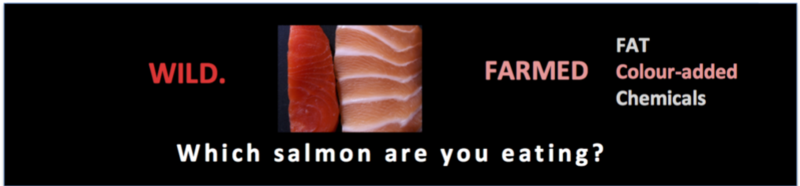 Which salmon are you eating4