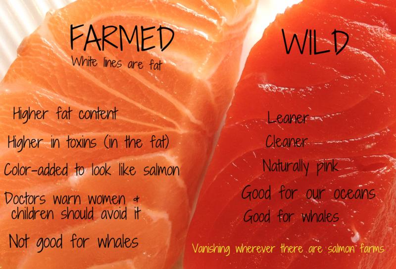 Farmed vs wild
