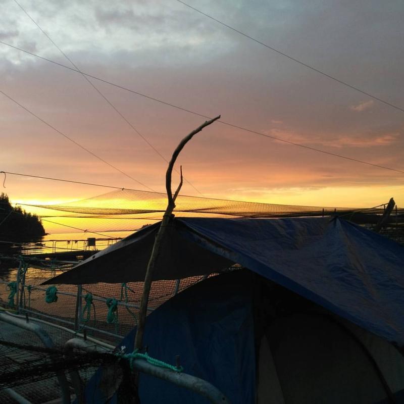 Camp on Midsummer