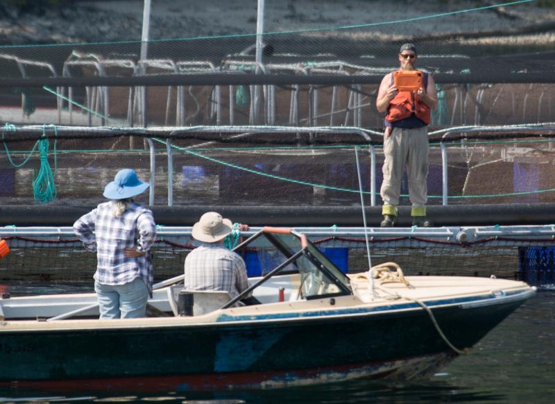 Looking at fish farm