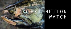 EXTINCTION WATCH