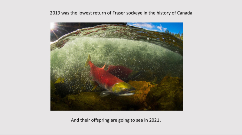 Screen Shot 2020-11-26 at 1.44.32 PM